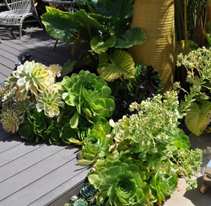 Small Space Deck Garden